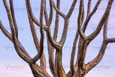 Quivertree Abstract