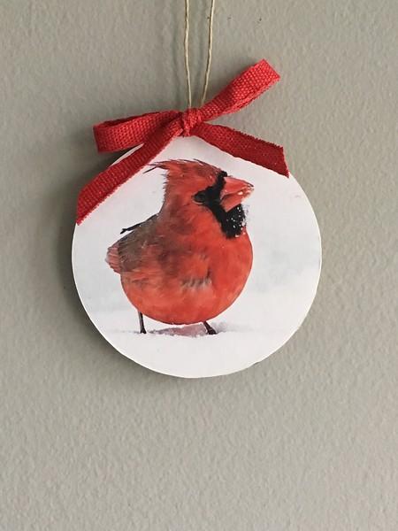 Hungry Cardinal