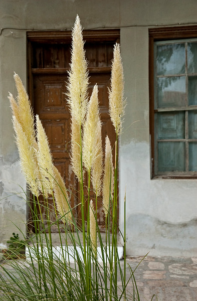 Pampas in Samos
