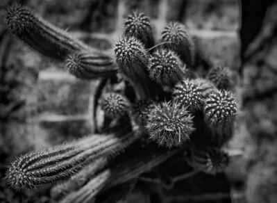 Desert Life--4
