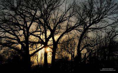 November Trees-3947