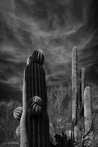 A Study in Shadows, Cactus and Clouds 18x24