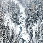 The Rodano river, winding between a frozen pine forest in Valais, Switzerland