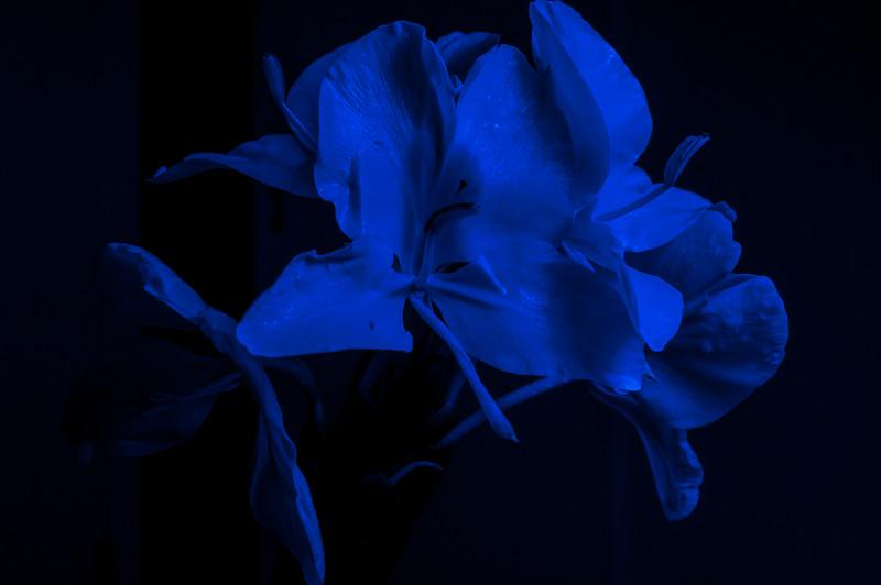 Blue Light Flower
