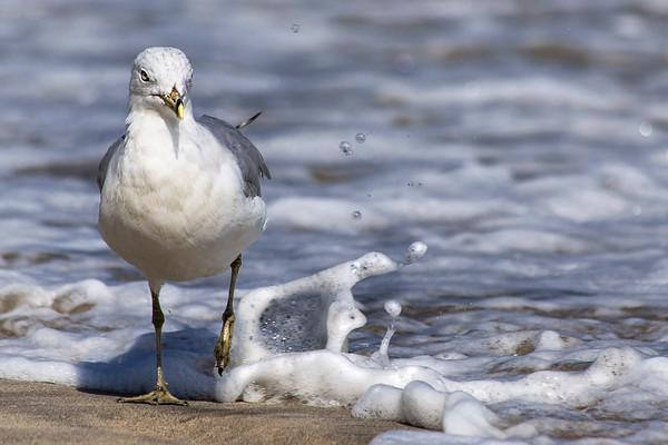 Splashin' Bird