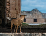 Uxmal Mother 2