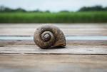 Dirty Snail Shell