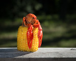 Crawfish Atop Corn Cob, 2
