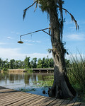 Cypress Lamp Post