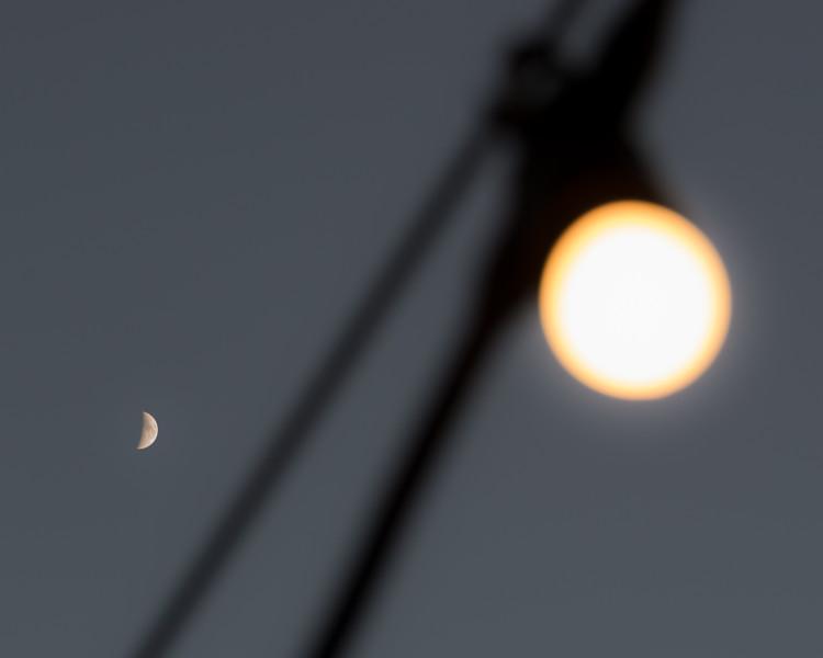 Moonlit Light Bulb