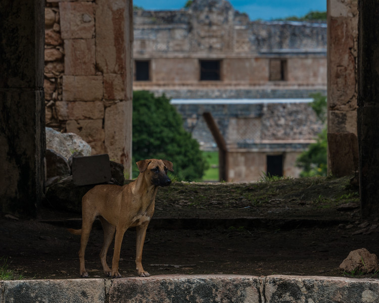 Uxmal Mother 1