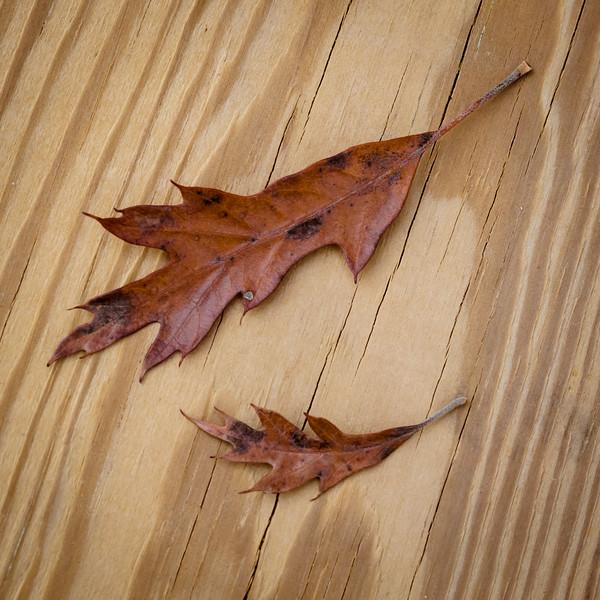 Leaf Generations