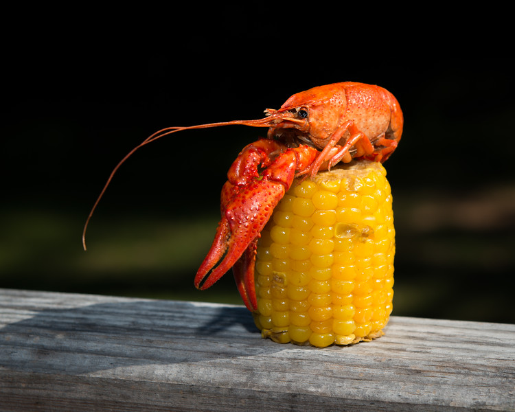 Crawfish Atop Corn Cob, 1