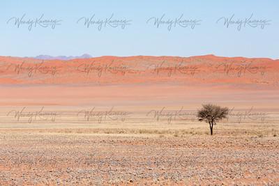 Lone Tree in the Desert- Namib-Naulluft Park, Namibia