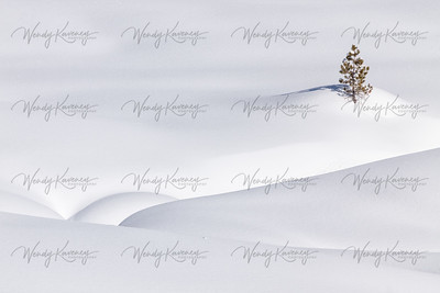 Intimate Winter Landscape- Yellowstone National Park