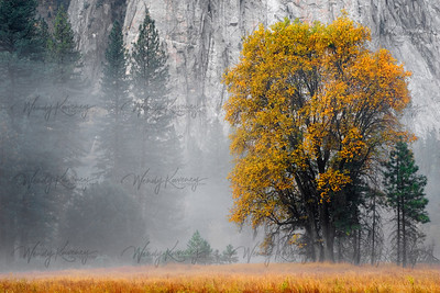 Yosemite Serenity- Yosemite National Park, CA