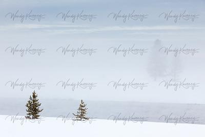 Misty Winter Morning- Yellowstone National Park