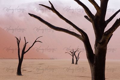 Pastels in the Desert- Deadvlei, Nambia
