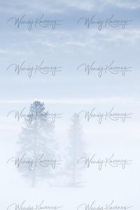 Winter Trees- Yellowstone National Park