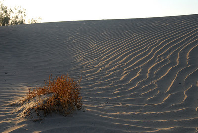 Stovepipe Dunes, Death Valley
