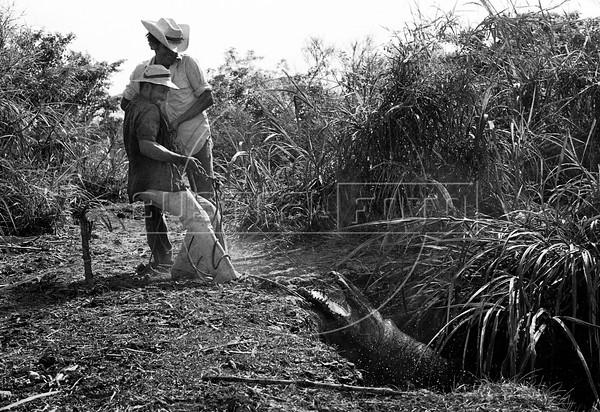 Criadero de cocodrilos, El Salvador, 1979