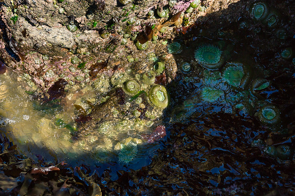 The organisms of tide pools act as a single unit, providing nutrients to each other and living in harmony.
