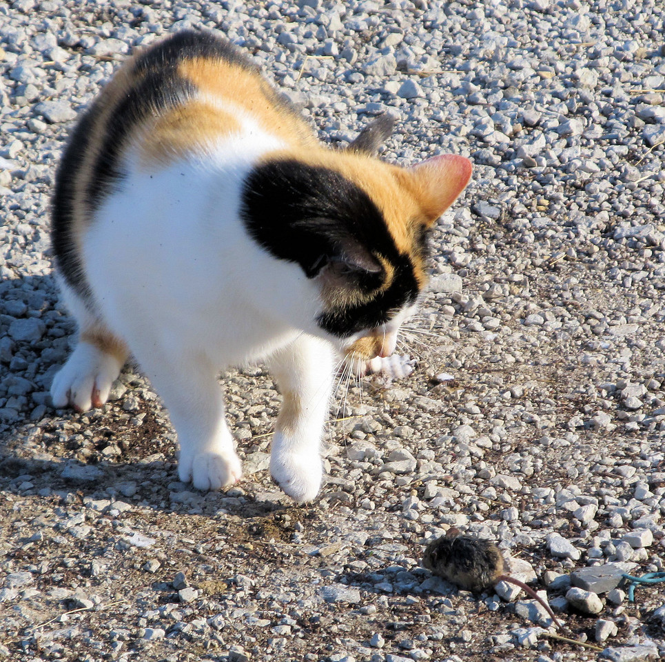 10 The Pretty Kitty Loves Mice.