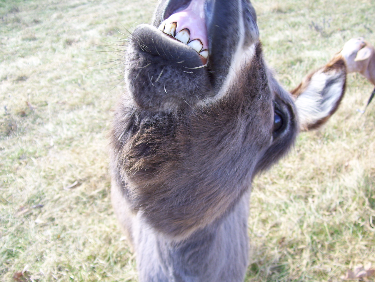 """10 Hee Haw, Hee Haw, 4 Cats With 1 Bite<br /> The Donkey probably thinks she is better than """"Quigley Down Under"""", who only got 2 with one shot."""