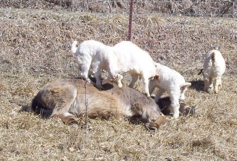 3-8-- I'm coming up<br /> The kids were all over her, even stepping on her head. Maybe she was in a daze, or then, again maybe she thought the rubdown was feeling good.
