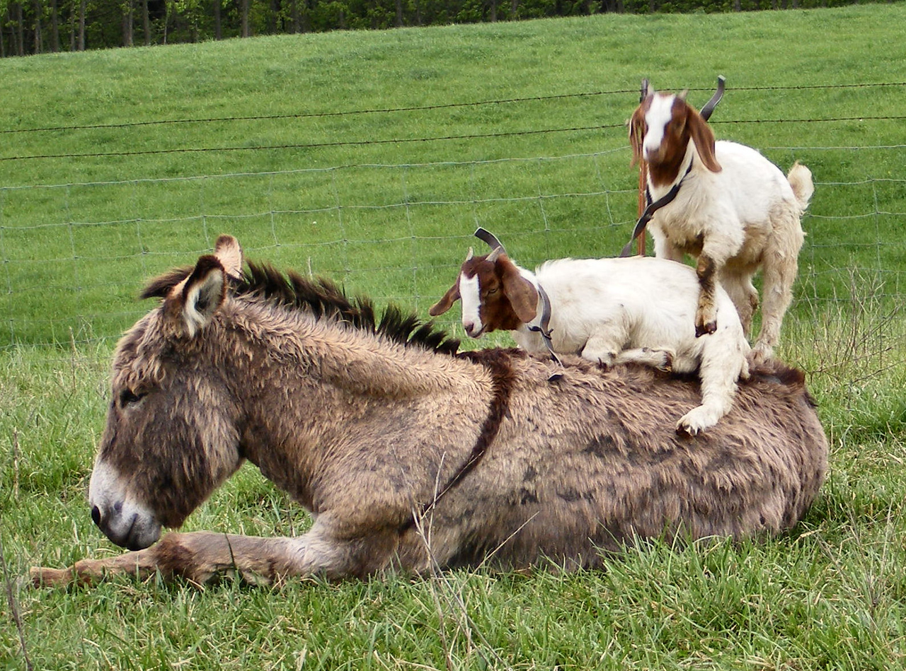 8-13-- Well, Leave Me Some Room To Be Up Here Too, Why Don't You<br /> You are taking up the whole donkey almost.