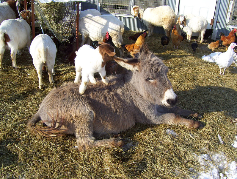1-9 There, will that be good?<br /> The donkey was getting ready to get up and the kid was getting ready to get off.