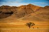 Gemsbok and Camel Thorn
