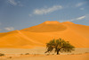 Camel Thorn and Dune