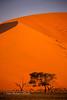 Camel Thorns at Dusk