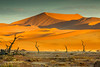 The Red Sands of the Namib
