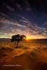 Morning Sunstar on the Namib