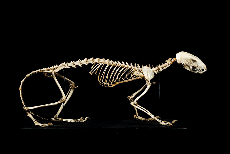 https://photos.smugmug.com/Stories/Animal-Skeletons/i-Cbv4Bxf/2/620c4da0/L/JvA-20130909-4693-L.jpg
