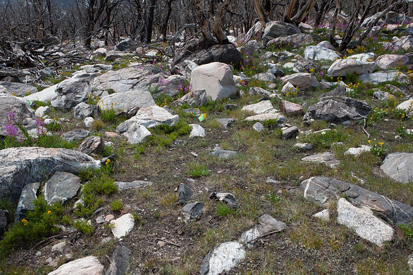 A well concealed lodge pad in the Wind River Range - note the circular area in the center of the photograph that has been cleared of rocks.