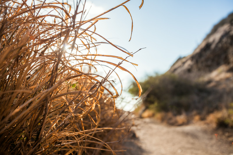 Kaena Pt. Trail