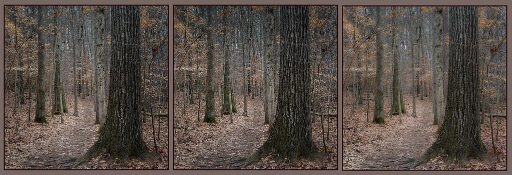 Woods: Three Studies in Depth