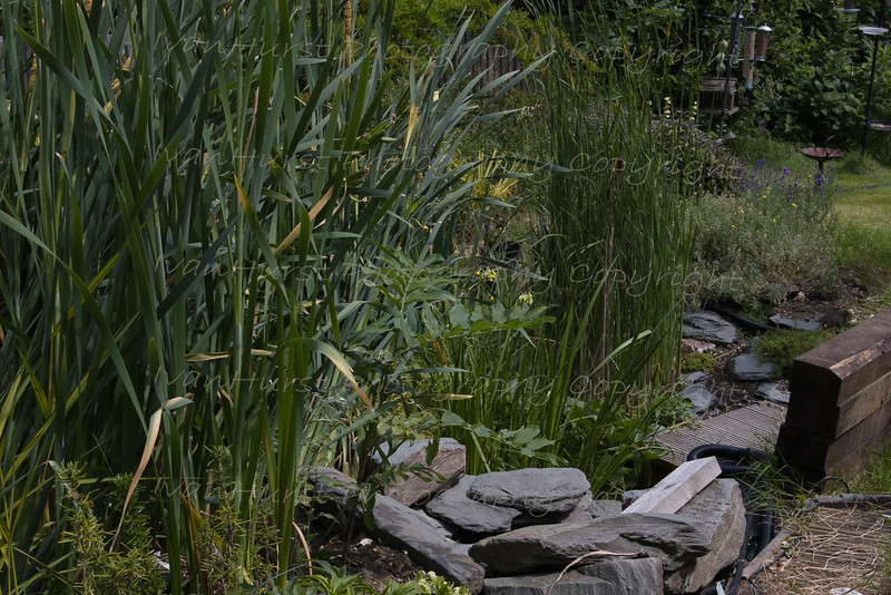 Reed Beds at home