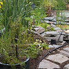 Reed Beds at home - water recycling