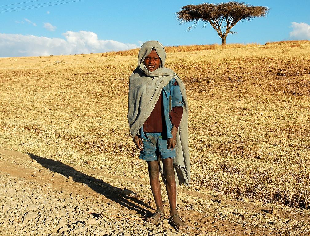 """Les champs de Teff<br /> En Ethiopie, le """"teff"""" est la céréale la plus courante, utilisée pour fabriquer les """"injeras"""". Le """"teff"""" est une minuscule graine ronde de couleur kaki qui ressemble au millet. L'origine du mot teff vient de« Teffa », ce qui veut dire « perdu » en Amharic, et ce nom lui vient de sa petite taille. En effet, c'est la plus petite graine au monde, et durant la récolte, sa taille fait qu'on la perd souvent  .<br /> On utilise le « teff » pour diverses choses telles que le renforcement des toits de chaume et des briques de terre. On l'utilise parfois comme base pour une boisson alcoolisée, même si, en Ethiopie,  la plupart d'entre elles sont élaborées essentiellement à partir de blé et de millet.<br /> Bien que l'on trouve le « teff » dans presque toutes les zones cultivées d'Ethiopie, on le produit  principalement  sur les hautes-terres et dans le centre du pays.<br /> Le « teff » s'est bien adapté au sol argileux, lourd et bien drainé des hautes-terres d'Ethiopie où la plupart des autres céréales poussent difficilement. L'altitude idéale pour cultiver le « Teff » est de 2000m, l'altitude des hautes-terres, justement."""
