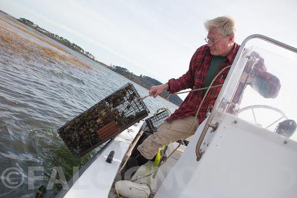 Roger Warner hauls a green crab trap in Ipswich, MA.