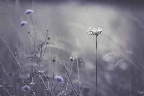 La Fille aux Fleurs Sauvages