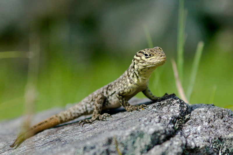 Besides llamas you can find lizards, chinchilla and a variety of birds around the site for those willing to look.
