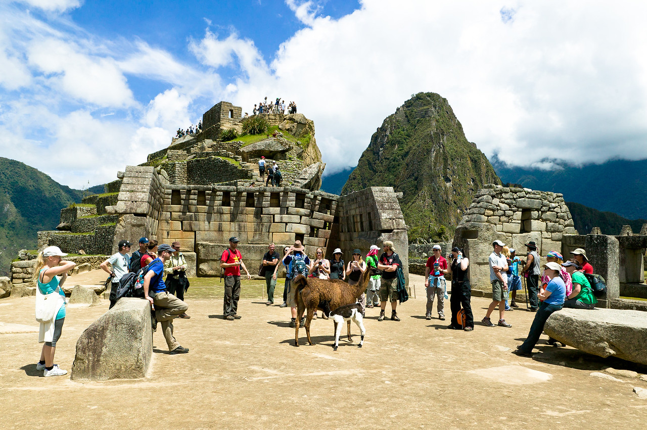 Tour groups and llamas gather in the Sacred Plaza.