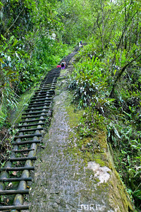 A wooden ladder on the Putucusi trial leading up Putucusi mountain. If you have the guts, energy and time, the 2 hour hike up this lesser traveled trail just outside of town is well worth the effort, rewarding visitors with a spectacular view of Machu Picchu.