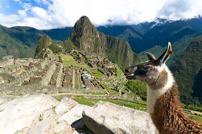 Be patient and you can get the quintessential Machu Picchu/llama photograph.