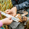 Two children help measure the claw of a Montagu's harrier chick at a nest in Groningen. Involving the local community is a key part of the conservation strategy of the Dutch Montagu's Harrier Foundation.